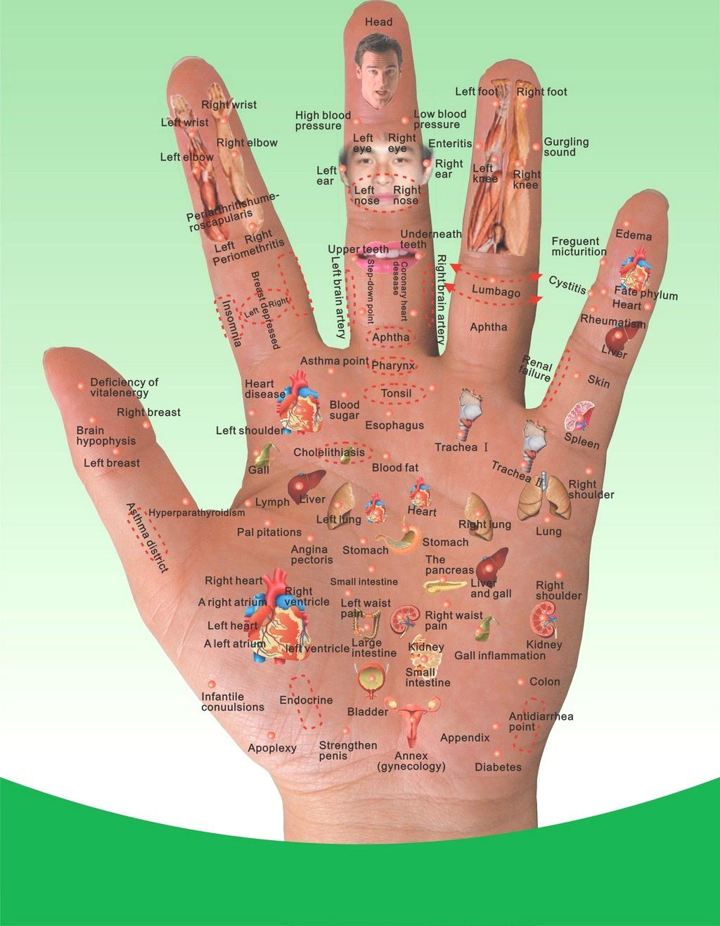 Схема органов на руках